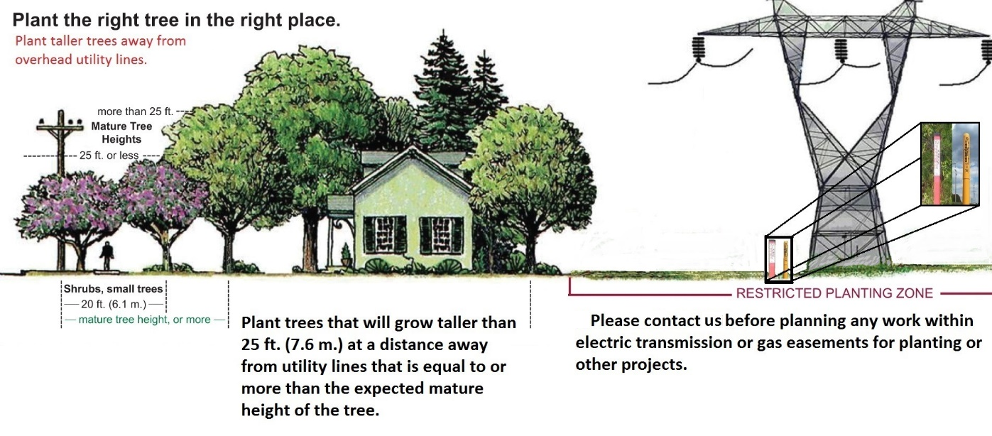 Plant the right tree in the right place